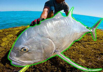ماهی بزرگ