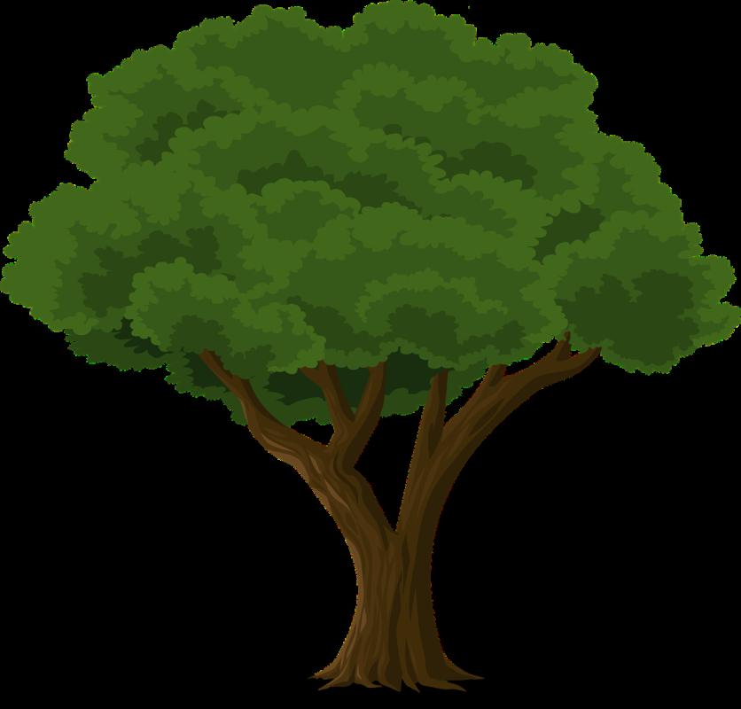 درخت و تغییر